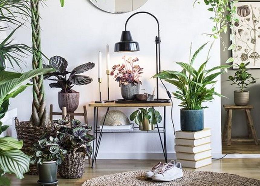 Winter is here: Πώς θα περιποιηθείς τα μονάκριβα φυτά σου πριν τη… χειμερία νάρκη | tlife.gr