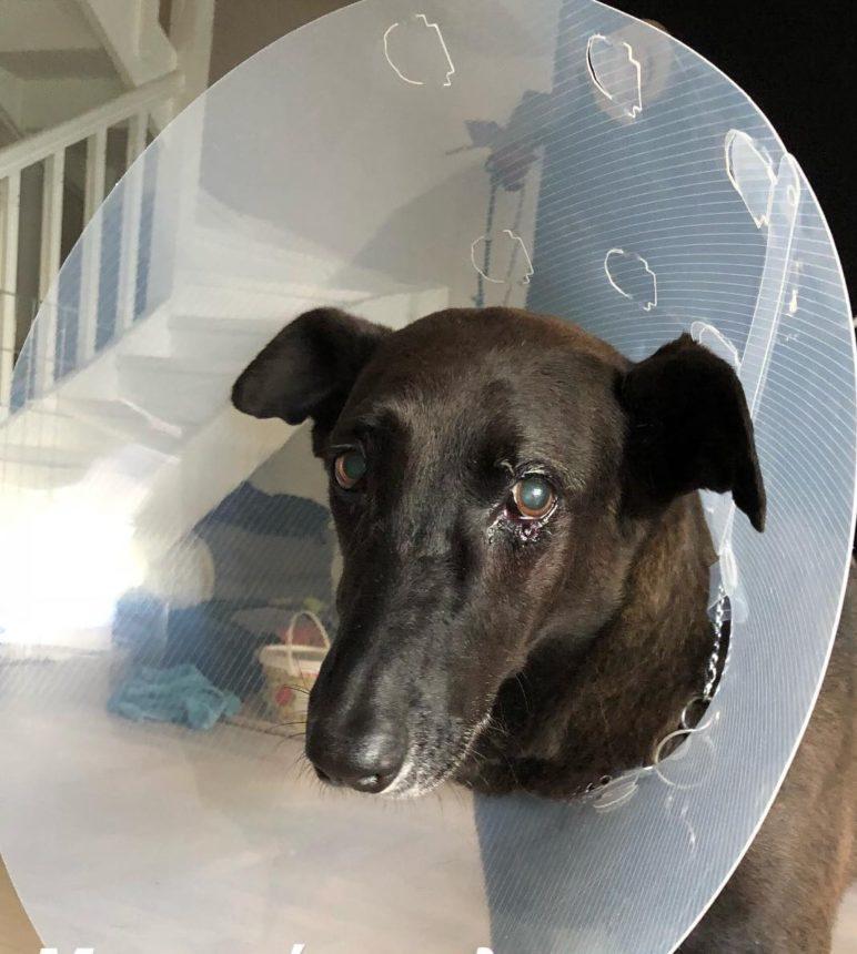 Είναι ο σκύλος γνωστού Έλληνα ηθοποιού που μόλις έκανε χειρουργική επέμβαση! [pics] | tlife.gr