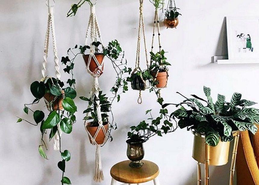 Plant Attack: Το τρίπτυχο-ευαγγέλιο για κάθε σπίτι με φυτά εσωτερικού χώρου | tlife.gr
