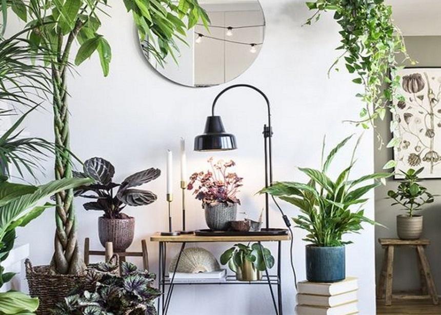 We will always have plants: 10 φυτά που θα καθαρίσουν την ατμόσφαιρα του σπιτιού σου | tlife.gr