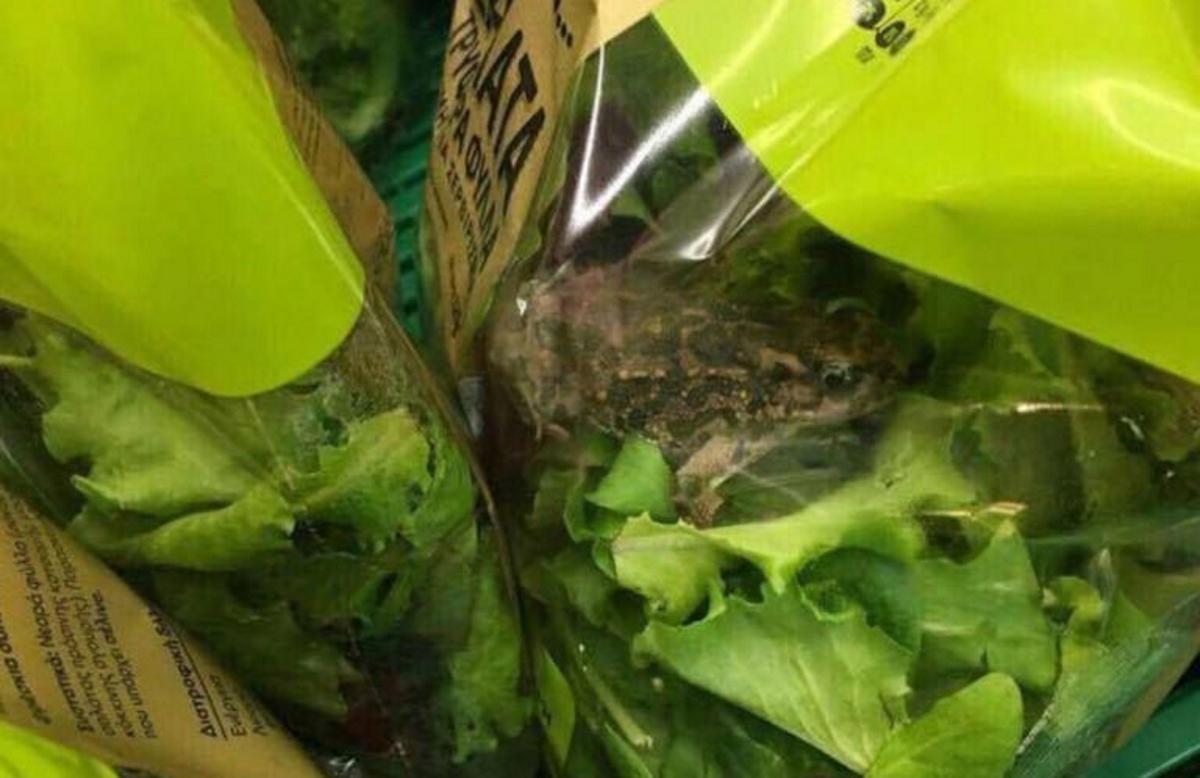 Η αλήθεια για τον βάτραχο που βρέθηκε σε σαλάτα | tlife.gr