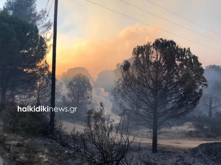 Μάχη με τις φλόγες στη Χαλκιδική! Ο μανιασμένος αέρας «απλώνει» τη φωτιά ανεξέλεγκτα [pics] | tlife.gr