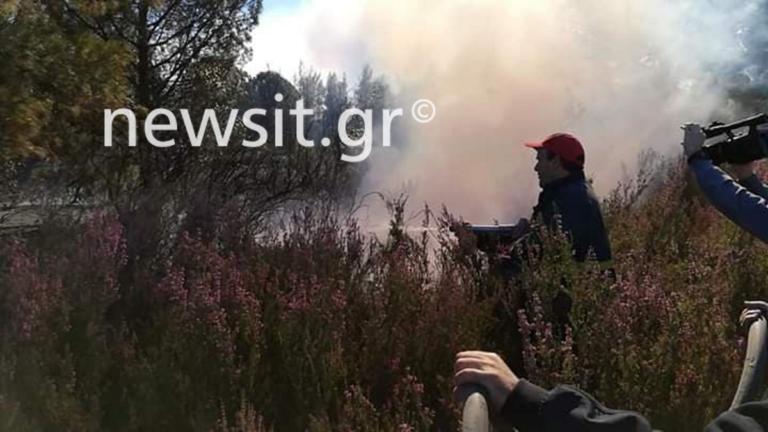 Φωτιά στη Χαλκιδική: Από τη θάλασσα θα φύγουν οι κάτοικοι αν γίνει εκκένωση | tlife.gr