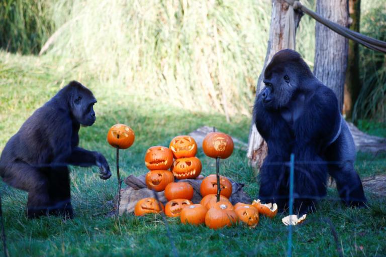Γιόρτασαν το Halloween στον ζωολογικό κήπο του Λονδίνου! Ξεκαρδιστικές εικόνες [pics] | tlife.gr