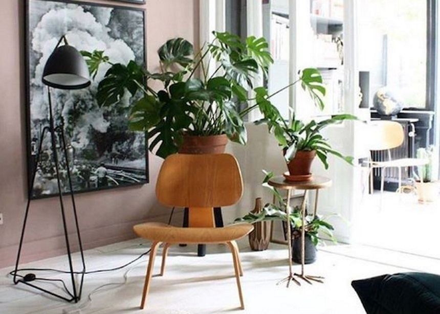 Fail Detector: Κάνεις κι εσύ αυτά τα τρία λάθη στην φροντίδα των φυτών σου; | tlife.gr