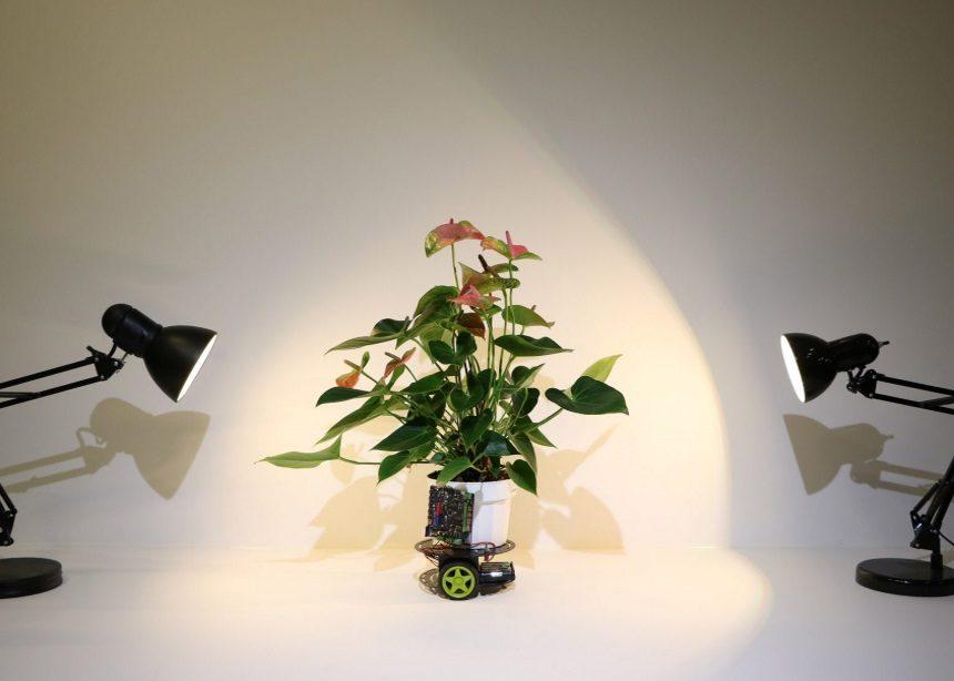 Elowan: Αυτό το ρομπότ αντιλαμβάνεται όλες τις ιδιαίτερες ανάγκες των φυτών σου!   tlife.gr