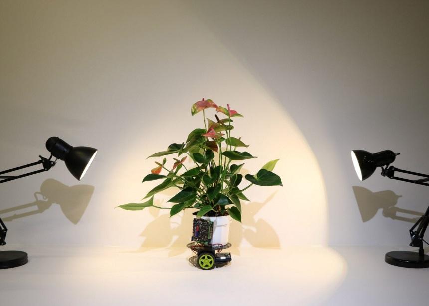 Elowan: Αυτό το ρομπότ αντιλαμβάνεται όλες τις ιδιαίτερες ανάγκες των φυτών σου! | tlife.gr