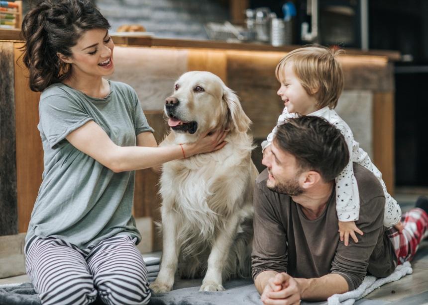 Family Pet: Πού θα αφήσετε το τετράποδο μέλος της οικογένειας τα φετινά Χριστούγεννα;