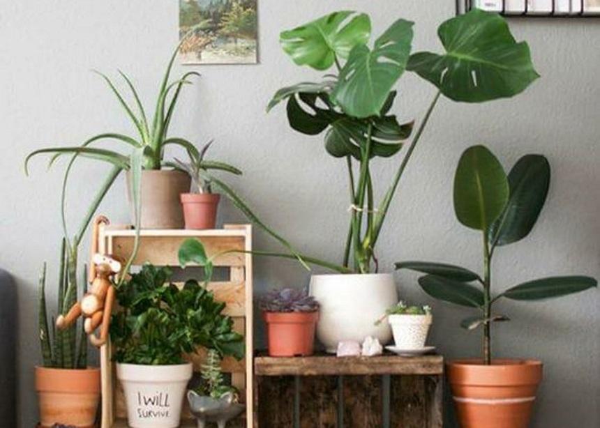Houseplants: Τέσσερα έξυπνα μυστικά που θα σε κάνουν την καλύτερη… φυτομαμά! | tlife.gr