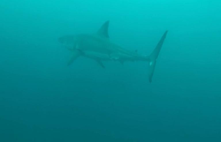Τον δάγκωσε καρχαρίας – Σε σοβαρή κατάσταση ο σέρφερ! video   tlife.gr