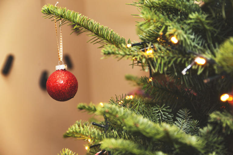 Μέχρι και 25.000 ζωύφια έχει κάθε χριστουγεννιάτικο δέντρο που βάζουμε σπίτι! Τι πρέπει να ξέρετε | tlife.gr