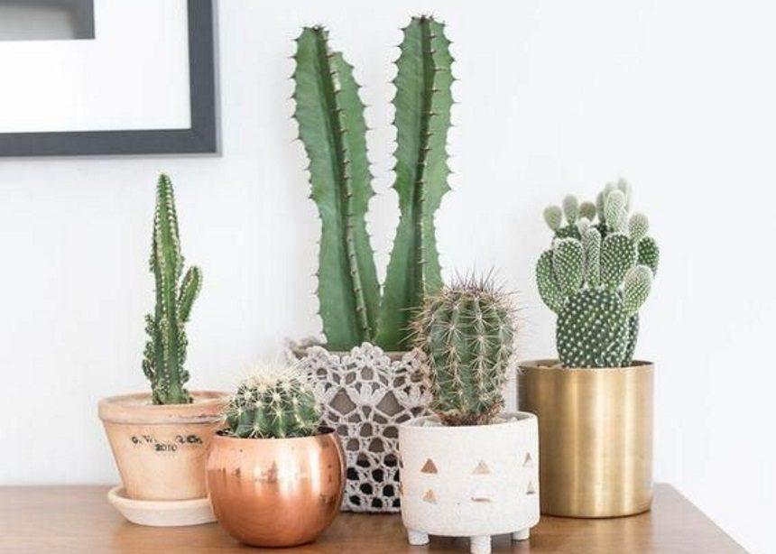 Cacti lovers: Πέντε fun facts που δεν γνώριζες για το πιο in style φυτό του 2019 | tlife.gr