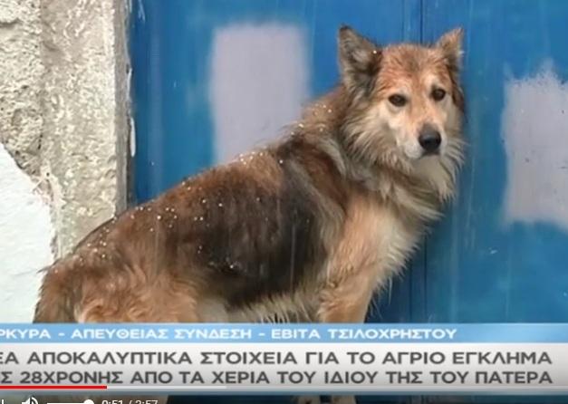 Συγκλονίζει ο σκύλος της άτυχης Αγγελικής – Οδηγούσε τους αστυνομικούς στο σημείο που ο 52χρονος έθαψε την κόρη του – Video | tlife.gr