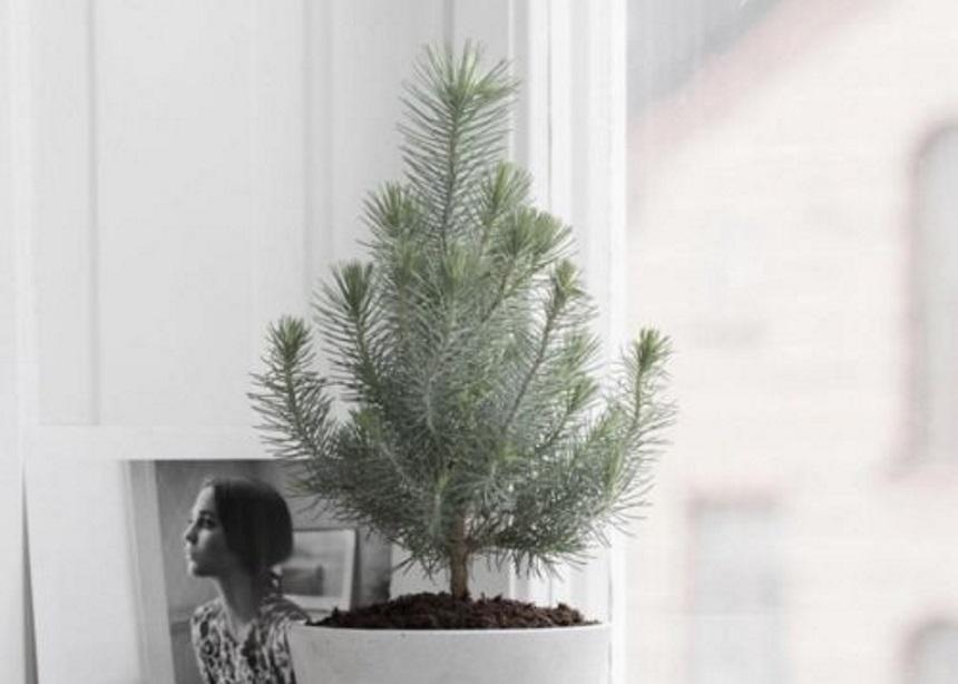 Xmas Un-decorating: Τέσσερα βήματα για να αποθηκεύσεις με ασφάλεια τα στολίδια σου | tlife.gr
