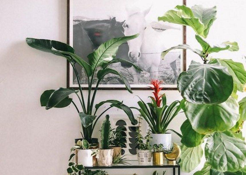 Plant parent: Τέσσερα στοιχεία που θα σε βοηθήσουν να φροντίσεις καλύτερα τα φυτά σου   tlife.gr