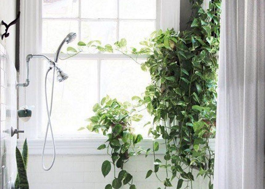 Plant life: Ένα νέο είδος φυτού υπόσχεται να καθαρίζει πλήρως τον αέρα που αναπνέουμε! | tlife.gr