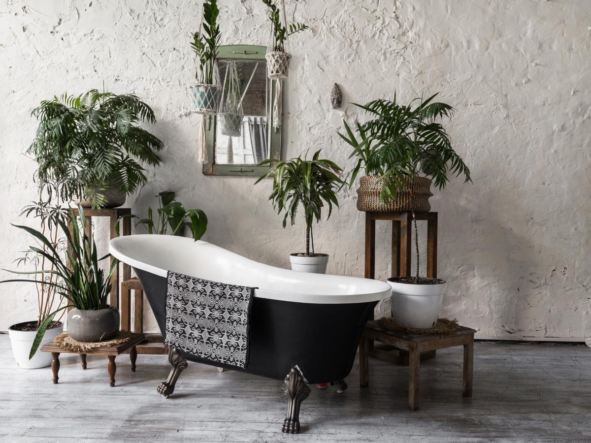 Δώσε στο μπάνιο σου την απόλυτη σπα… εμπειρία με αυτά τα πέντε φυτά εσωτερικού χώρου!