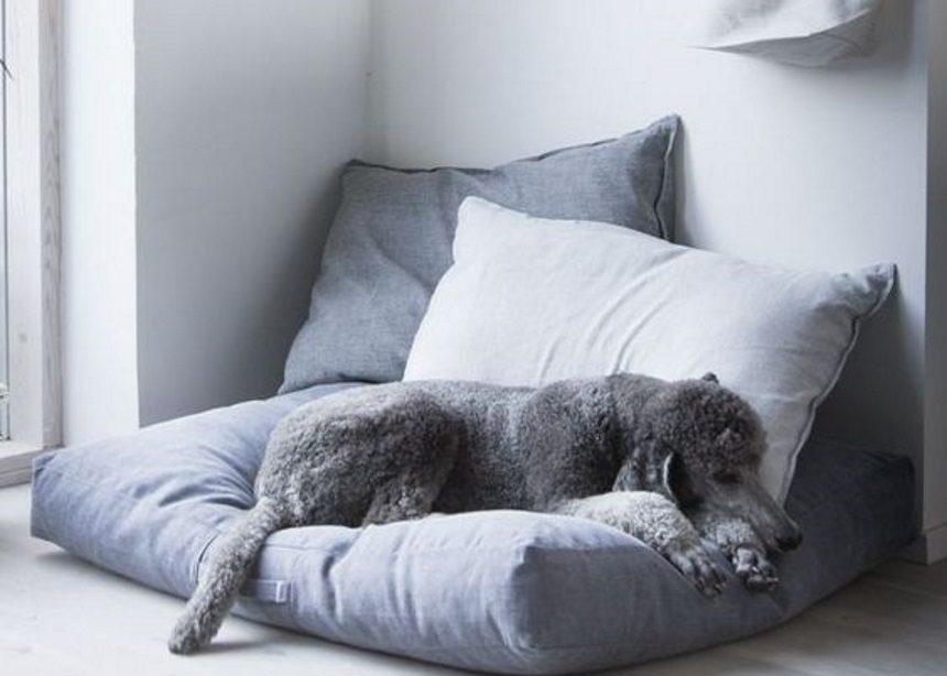 Pet family: Πέντε σωτήρια tips για ένα stylish σπίτι με κατοικίδια ζώα | tlife.gr