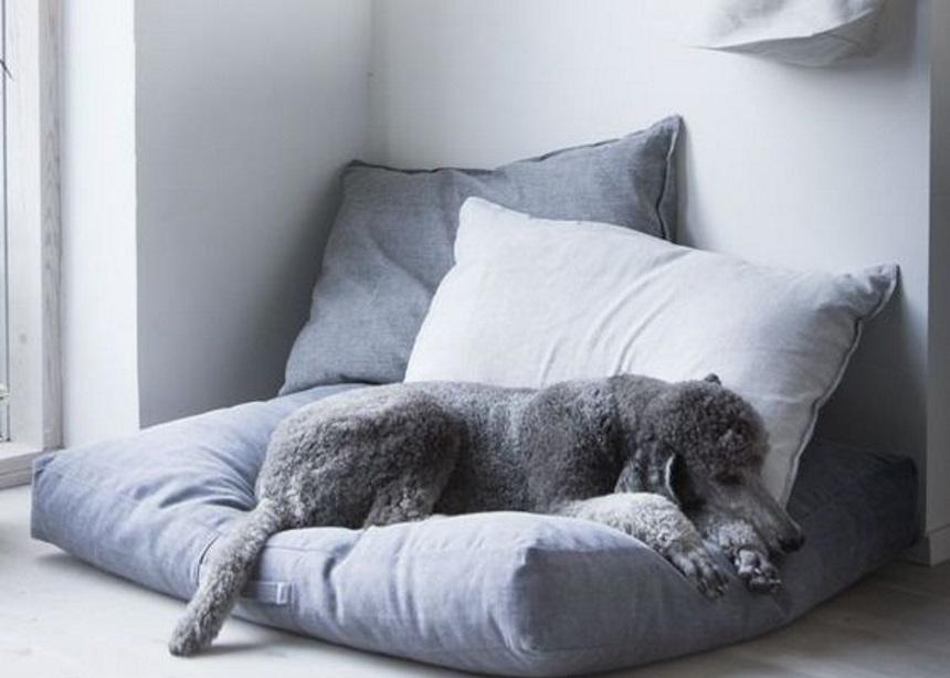 Pet family: Πέντε σωτήρια tips για ένα stylish σπίτι με κατοικίδια ζώα