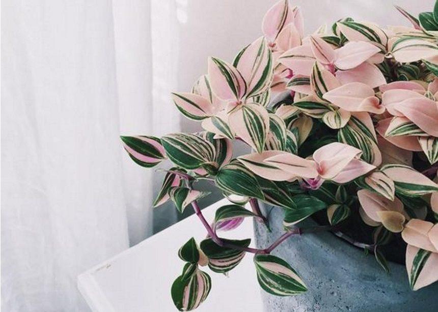 Θέλεις να βοηθήσεις τα φυτά σου; Βράσε δυο αυγά, να στα πω! | tlife.gr