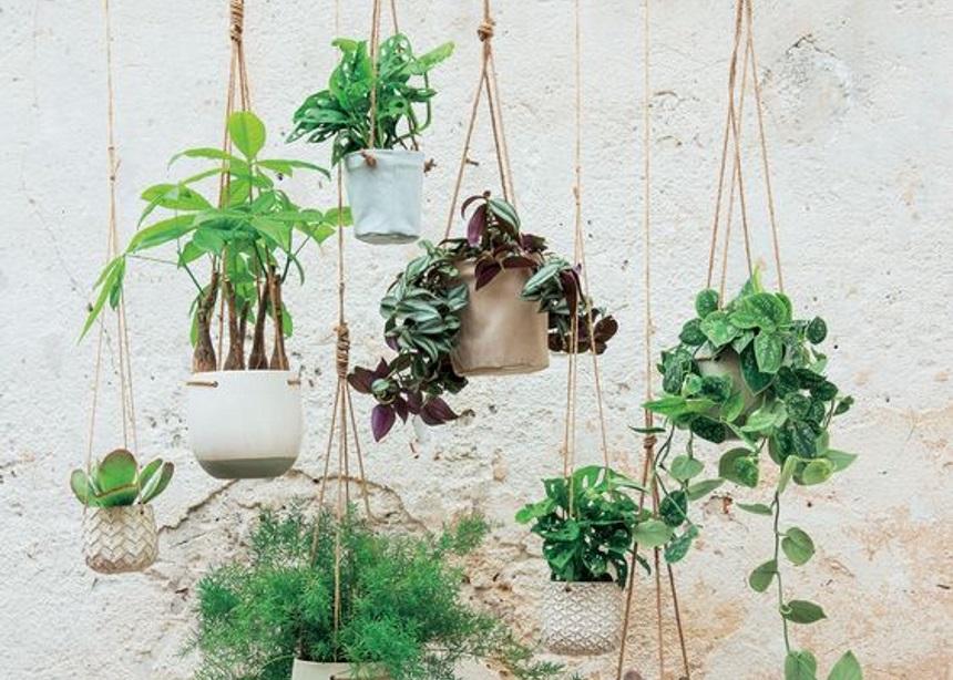 Φυτά εσωτερικού χώρου: Σύντομος οδηγός για τα πιο εντυπωσιακά κρεμαστά φυτά!