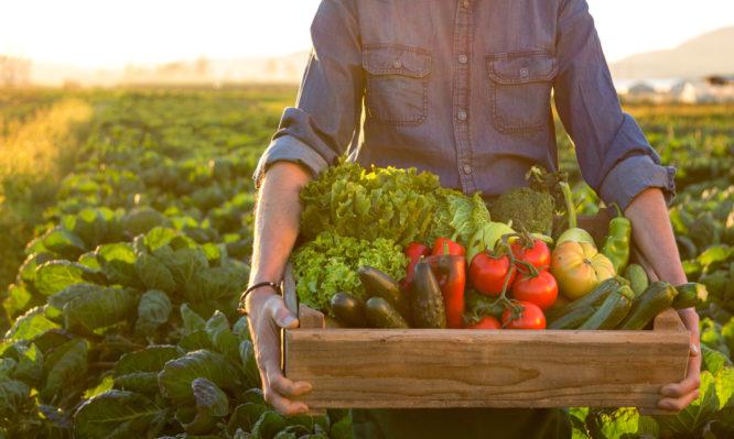Βιολογικά τρόφιμα: Είναι πιο θρεπτικά; Τι κερδίζετε – Τι δείχνουν οι έρευνες [vid]   tlife.gr