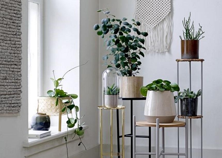 Trending plants: Τα πέντε πιο δημοφιλή φυτά εσωτερικού χώρου και όλα τα info που χρειάζεσαι