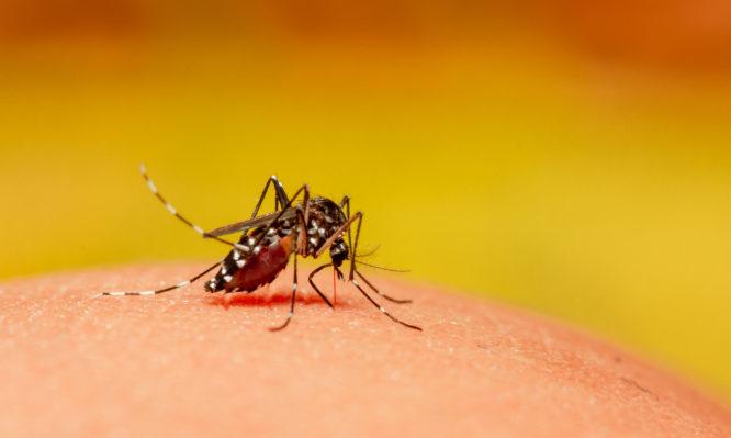 Κουνούπια: Πώς «μυρίζουν» τον ιδρώτα μας (και πώς να τα σταματήσεις) | tlife.gr