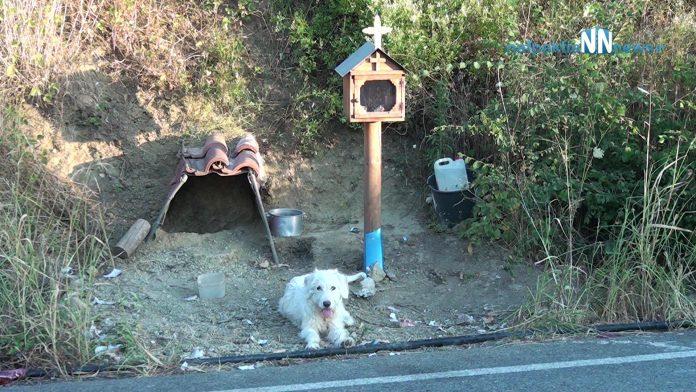 Σκυλάκι στην Ναυπακτία ζει εδώ και 1,5 χρόνο στο σημείο που σκοτώθηκε το αφεντικό του! ΒΙΝΤΕΟ | tlife.gr