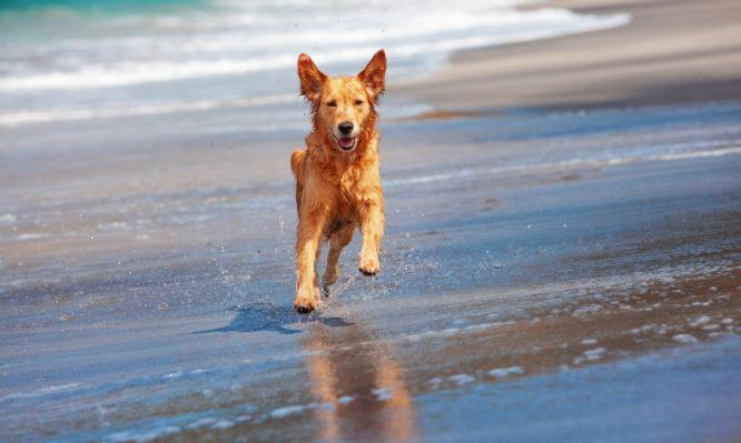 Σκύλος και θάλασσα: Τι πρέπει να προσέχεις όταν πηγαίνετε μαζί στην παραλία | tlife.gr