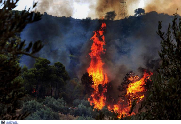 Φωτιά τώρα στη Πάργα | tlife.gr