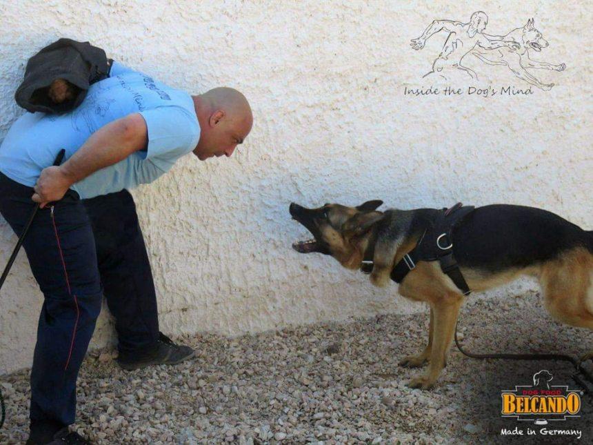 Νεκρό βρέφος από ροτβάιλερ: Εκπαιδευτής σκύλων εξηγεί στο ΤLIFE, τι έφταιξε και τι πρέπει να γίνει! | tlife.gr