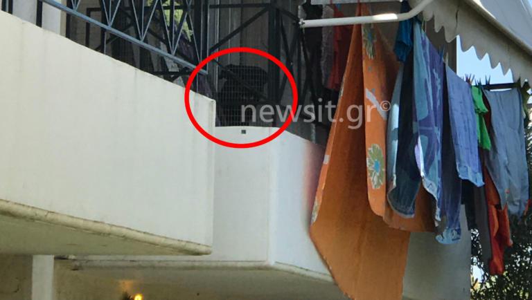 «Το σκυλί ήταν άγριο,το είχαν στο μπαλκόνι» – Σοκάρει η υπόθεση της επίθεσης στο βρέφος από τον σκύλο   tlife.gr