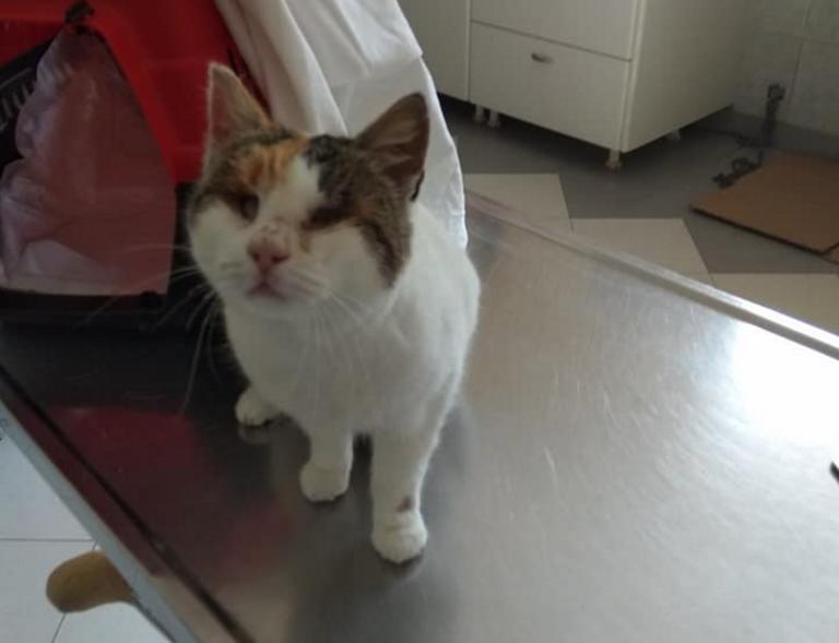 Υιοθετήθηκε η τυφλή γάτα, που βασανίστηκε από παιδιά στη Φολέγανδρο | tlife.gr
