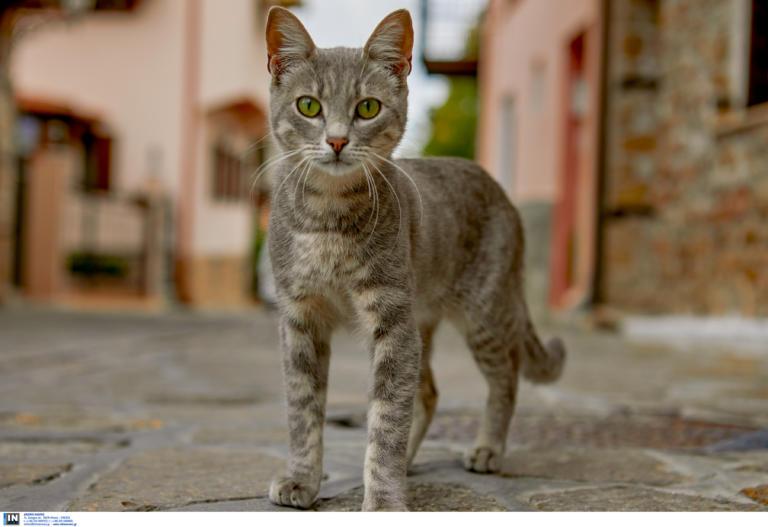Φολέγανδρος: Σάλος από την κακοποίηση τυφλής γάτας από μαθητές
