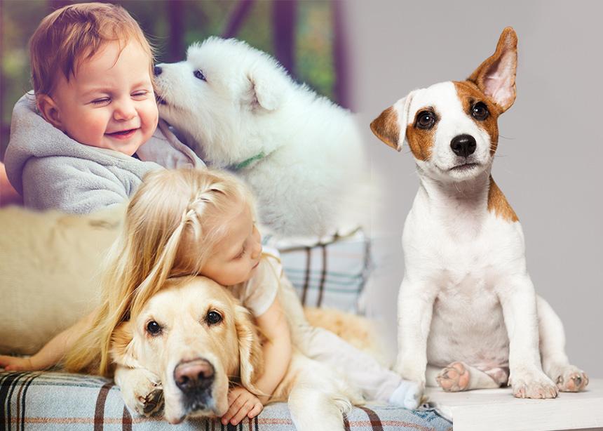 Παγκόσμια Ημέρα των Ζώων: Τα οφέλη που προσφέρει ένα ζωάκι σε ένα μικρό παιδί   tlife.gr