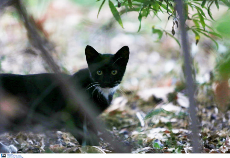 Πέθανε το γατάκι που κακοποίσαν παιδιά στη Μυτιλήνη – Σοκάρει η περιγραφή του γιατρού