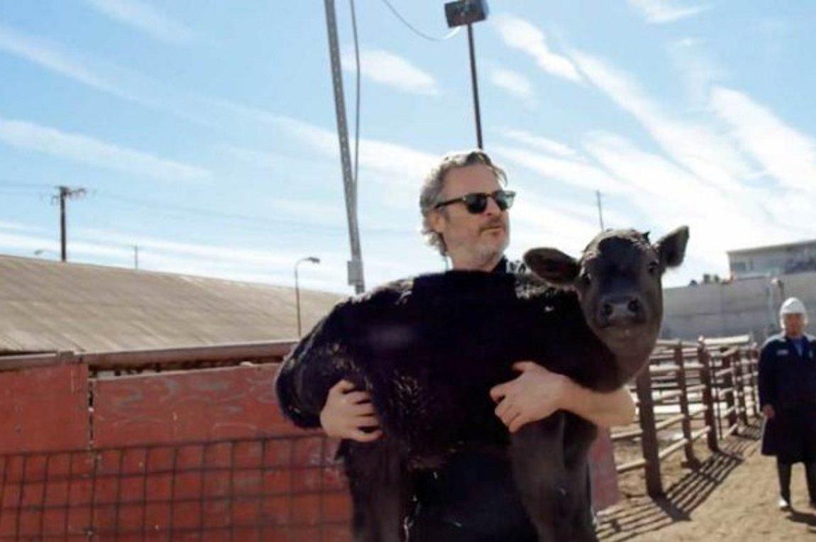 Χοακίν Φίνιξ: Η viral διάσωση αγελάδας και νεογέννητου μοσχαριού από σφαγείο! [video]