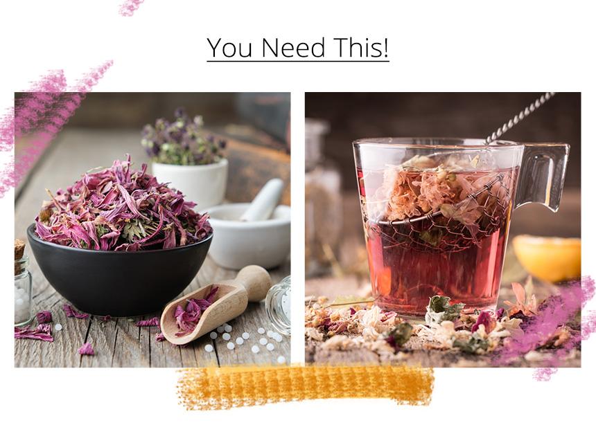 Εχινάκεια: Το βότανο που βοηθάει στην ενίσχυση του ανοσοποιητικού σου συστήματος | tlife.gr