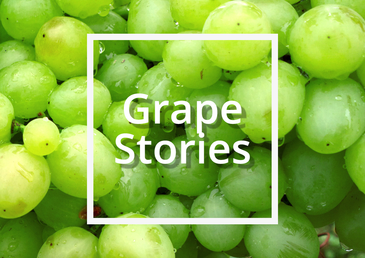 Σταφύλι: Το φρούτο εποχής με τις ευεργετικές ιδιότητες