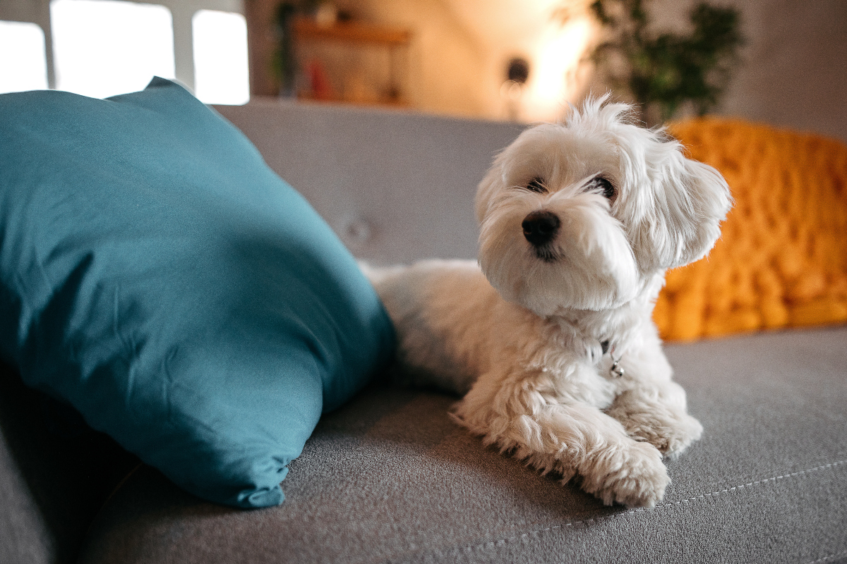 H Prada σχεδιάζει ρούχα για σκυλάκια που έχουν πάνω το χαρακτηριστικό logo της!