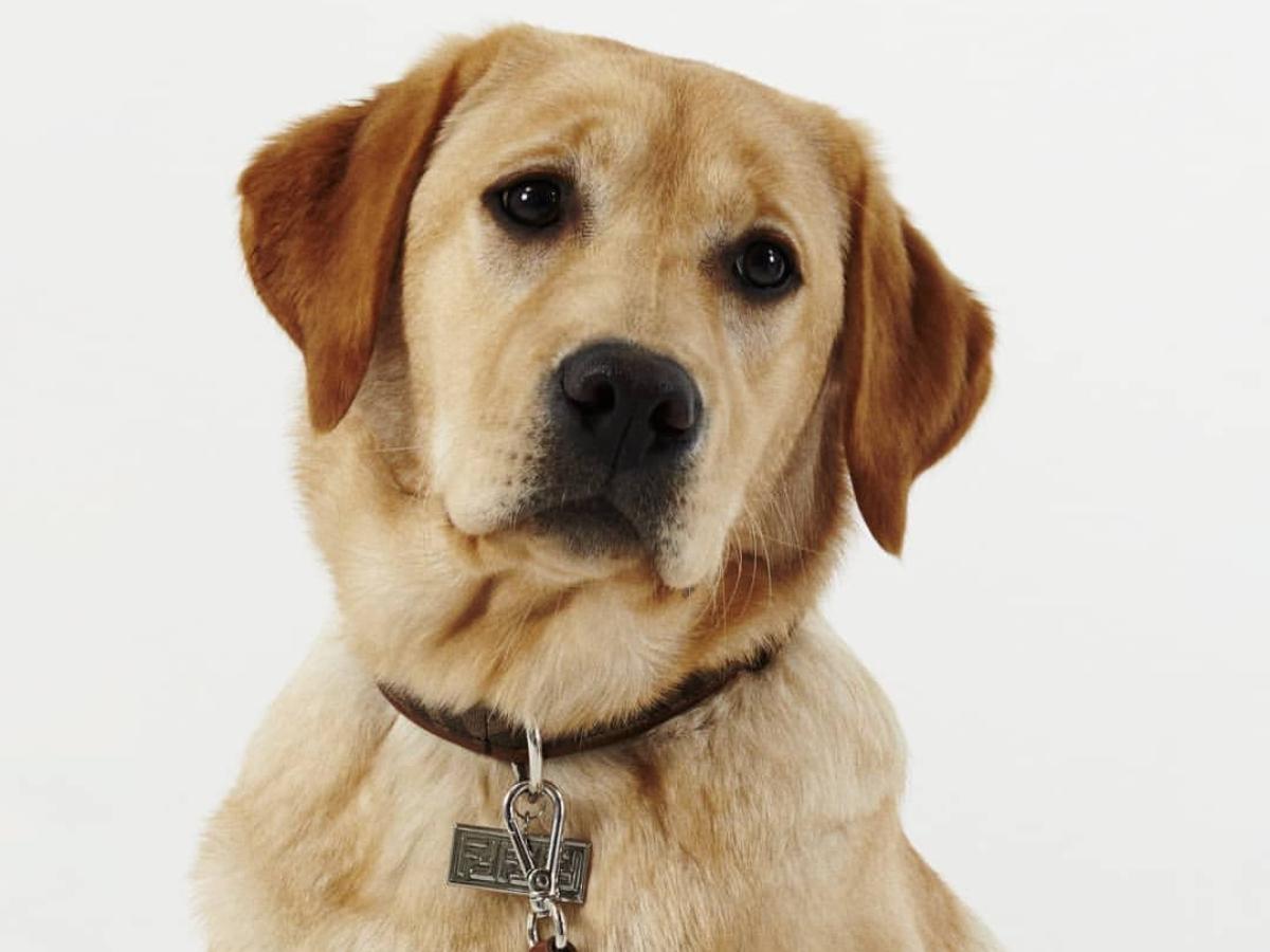 O οίκος Fendi λανσάρει συλλογή για σκυλάκια!